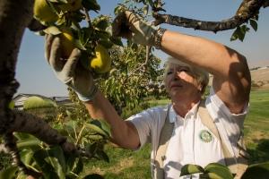 Rotarian gleaning